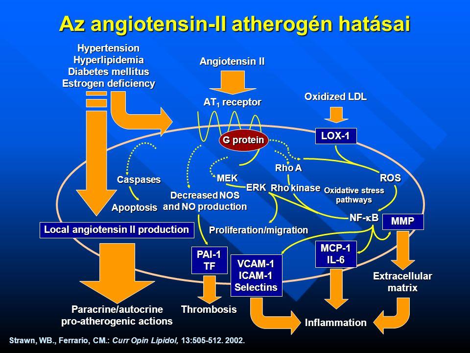 Az angiotensin-II atherogén hatásai Strawn, WB., Ferrario, CM.: Curr Opin Lipidol, 13:505-512.