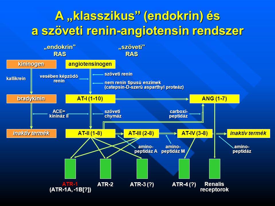 """A """"klasszikus (endokrin) és a szöveti renin-angiotensin rendszer """"endokrin RAS""""szöveti RAS angiotensinogen vesében képzôdô renin szöveti renin nem renin típusú enzimek (catepsin-D-szerû asparthyl proteáz) AT-I (1-10)ANG (1-7) AT-II (1-8) ACE= kinináz II kininogen bradykinin inaktív termék kallikrein szövetichymázcarboxi-peptidáz AT-III (2-8)AT-IV (3-8)inaktív termék ATR-1 (ATR-1A, -1B[ ]) ATR-2 ATR-3 ( ) ATR-4 ( ) Renalis receptorok amino- peptidáz A amino- peptidáz M amino-peptidáz"""