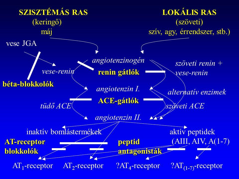 SZISZTÉMÁS RASLOKÁLIS RAS (keringő)(szöveti) májszív, agy, érrendszer, stb.) angiotenzinogén angiotenzin I. angiotenzin II. vese JGA vese-renin szövet