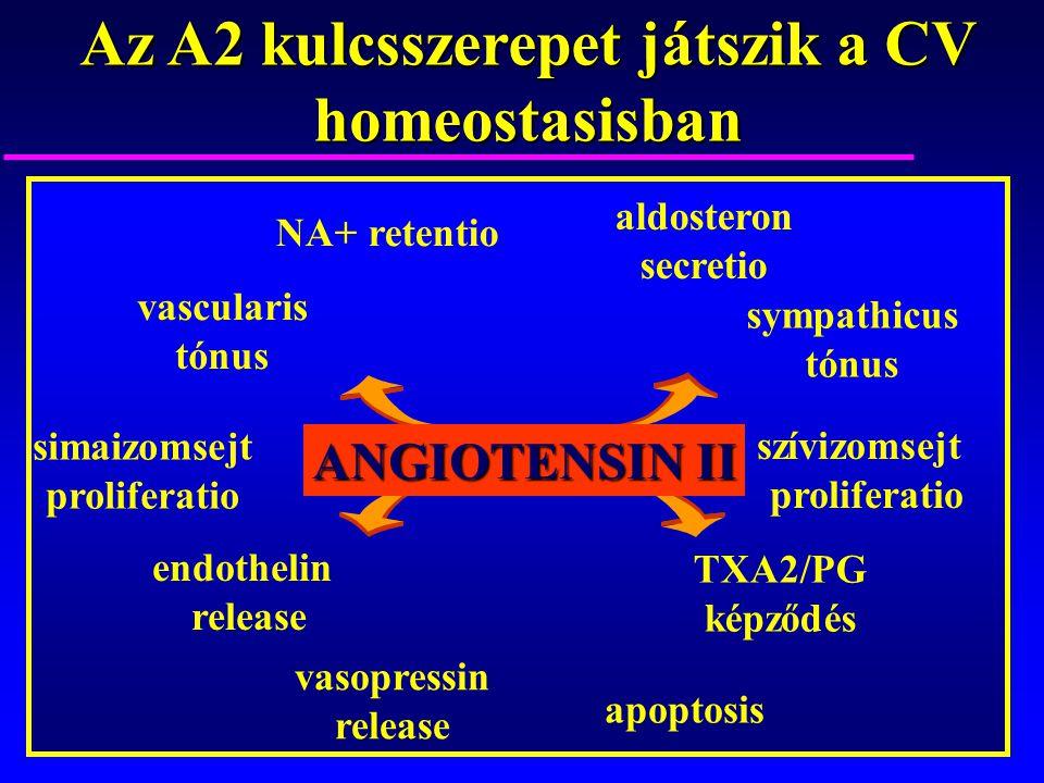 vascularis tónus NA+ retentio aldosteron secretio simaizomsejt proliferatio szívizomsejt proliferatio endothelin release TXA2/PG képződés sympathicus