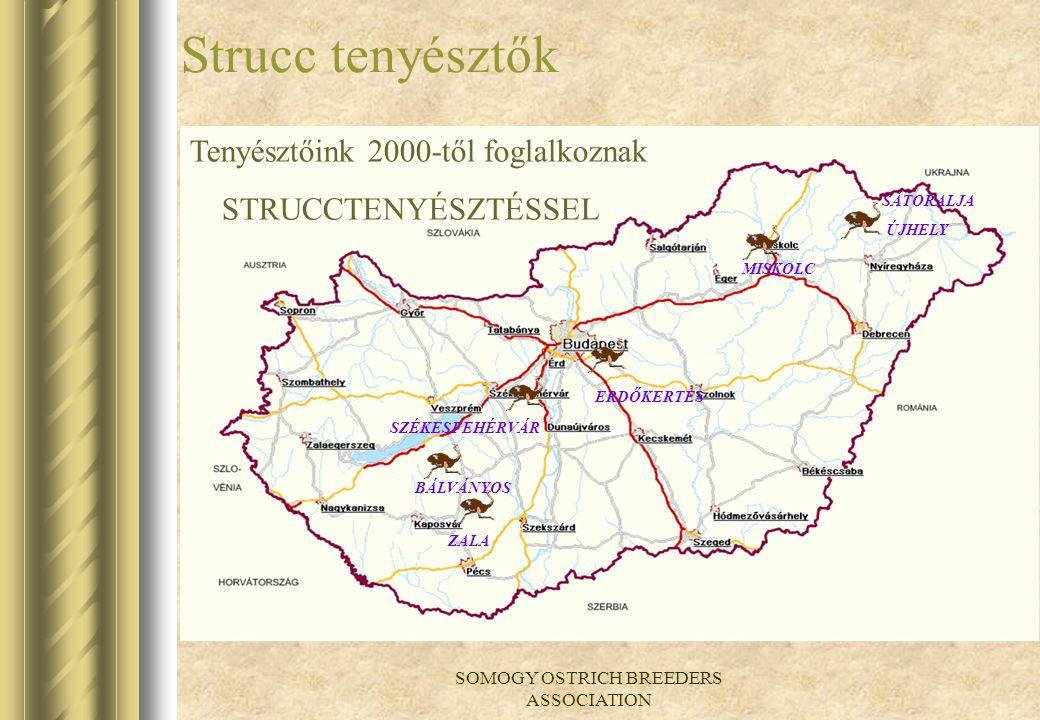 SOMOGY OSTRICH BREEDERS ASSOCIATION Somogystrucc Egyesület Hungary