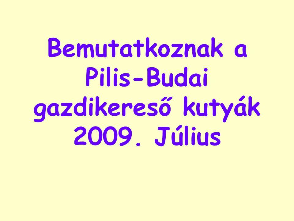 Bemutatkoznak a Pilis-Budai gazdikereső kutyák 2009. Július