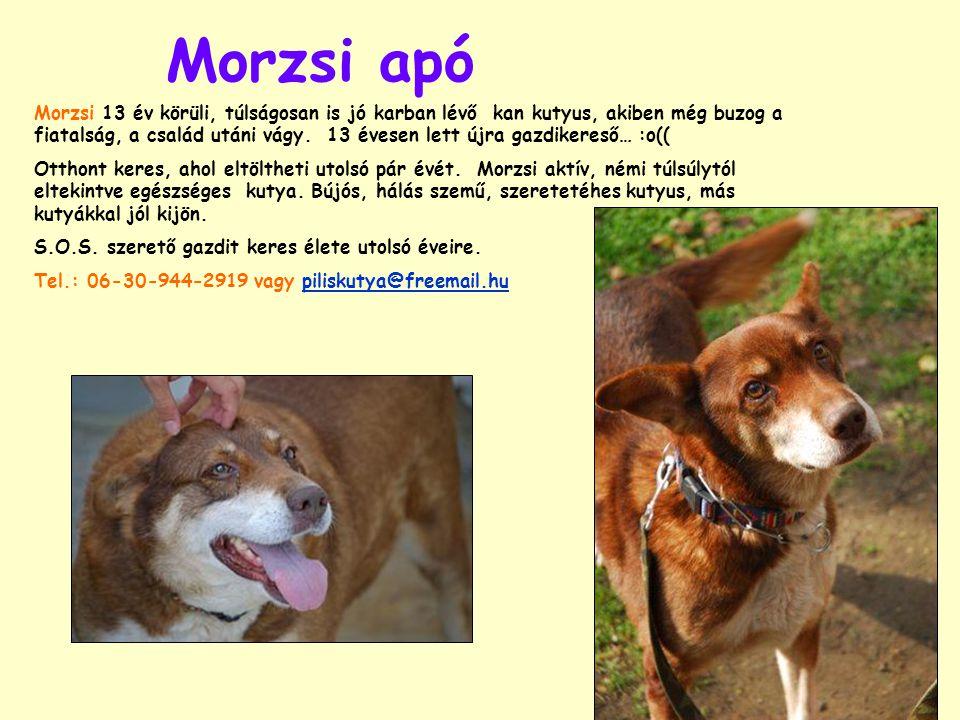 Morzsi apó Morzsi 13 év körüli, túlságosan is jó karban lévő kan kutyus, akiben még buzog a fiatalság, a család utáni vágy.
