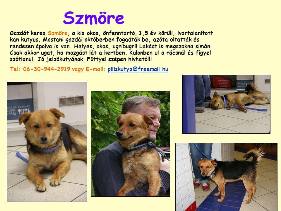 Szmöre Gazdát keres Szmöre, a kis okos, önfenntartó, 1,5 év körüli, ivartalanított kan kutyus. Mostani gazdái októberben fogadták be, azóta oltatták é