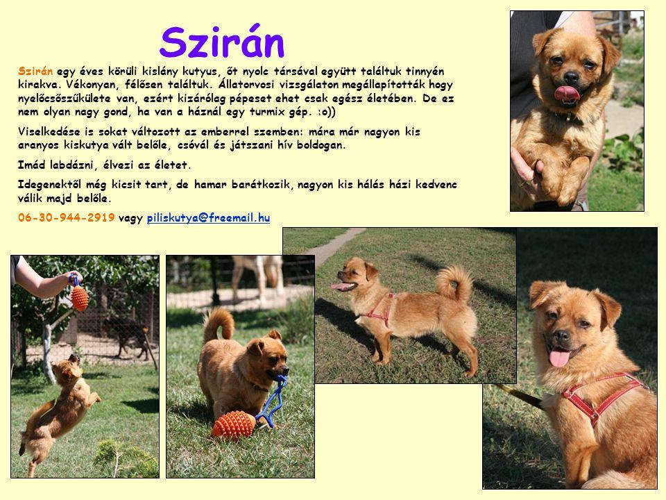 Szirán Szirán egy éves körüli kislány kutyus, őt nyolc társával együtt találtuk tinnyén kirakva. Vékonyan, félősen találtuk. Állatorvosi vizsgálaton m