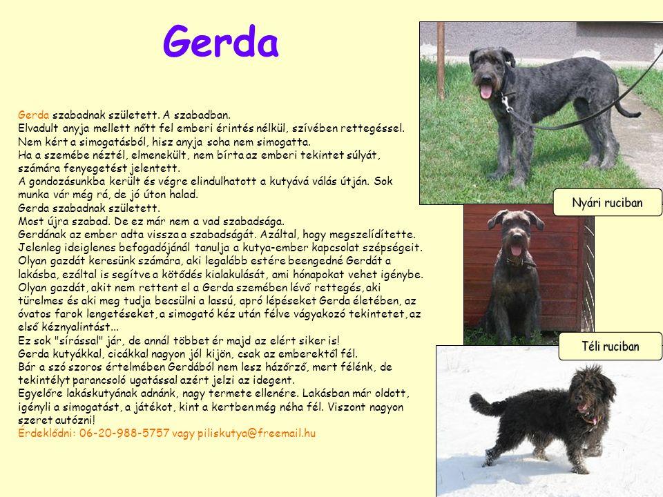 Gerda Gerda szabadnak született. A szabadban. Elvadult anyja mellett nőtt fel emberi érintés nélkül, szívében rettegéssel. Nem kért a simogatásból, hi