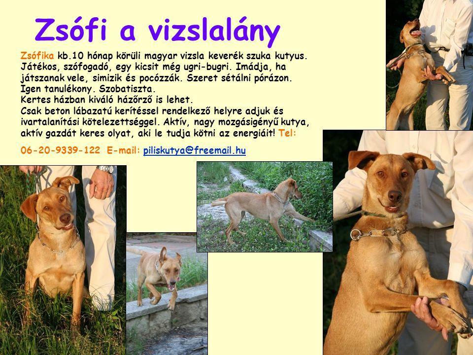 Zsófi a vizslalány Zsófika kb.10 hónap körüli magyar vizsla keverék szuka kutyus. Játékos, szófogadó, egy kicsit még ugri-bugri. Imádja, ha játszanak