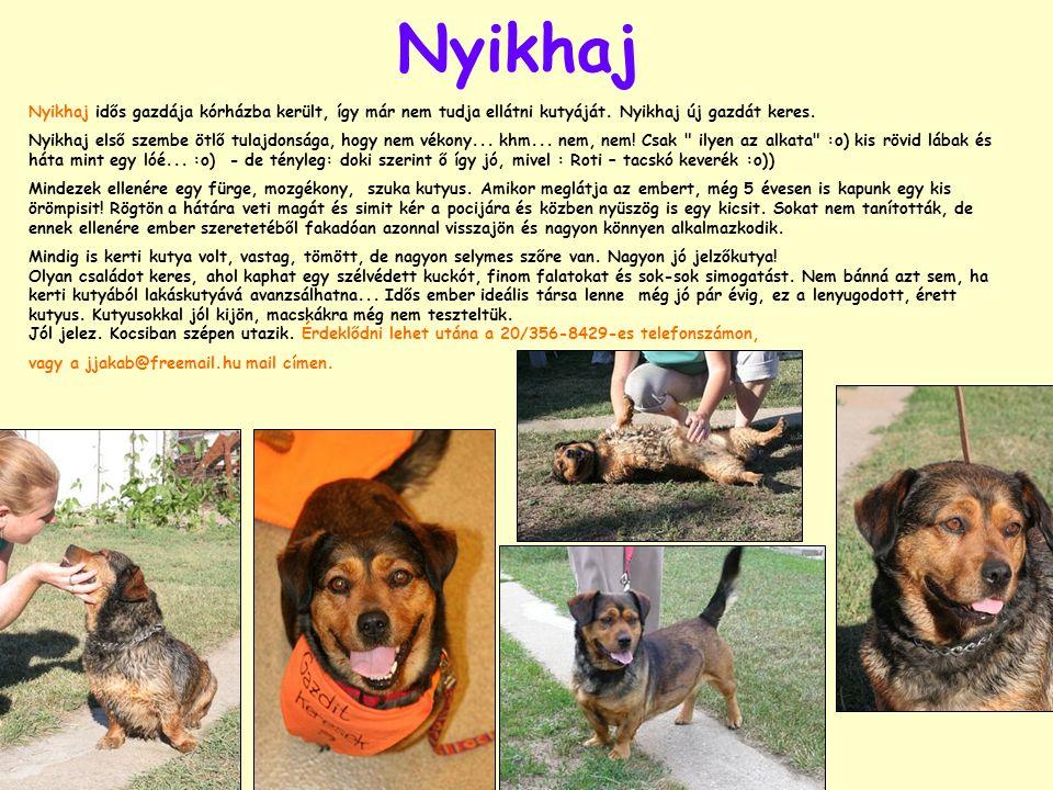 Nyikhaj Nyikhaj idős gazdája kórházba került, így már nem tudja ellátni kutyáját. Nyikhaj új gazdát keres. Nyikhaj első szembe ötlő tulajdonsága, hogy