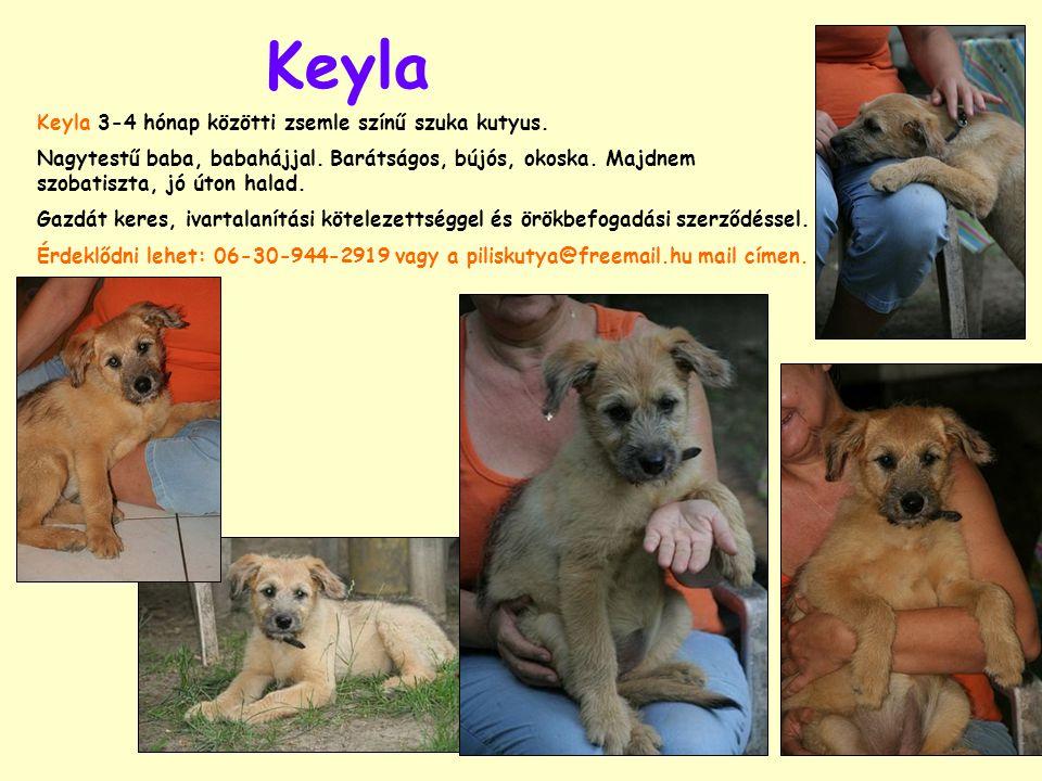 Keyla Keyla 3-4 hónap közötti zsemle színű szuka kutyus. Nagytestű baba, babahájjal. Barátságos, bújós, okoska. Majdnem szobatiszta, jó úton halad. Ga