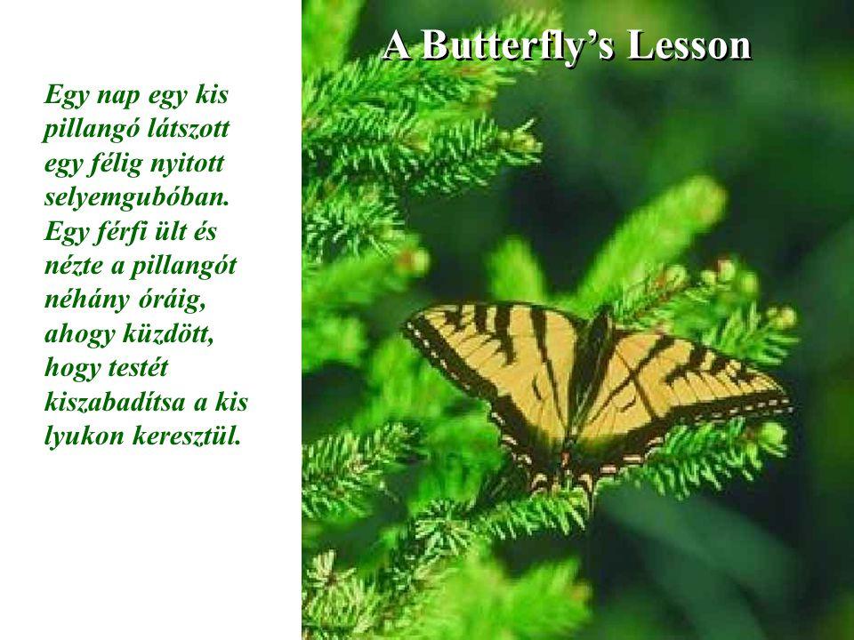 A Butterfly's Lesson Egy nap egy kis pillangó látszott egy félig nyitott selyemgubóban.