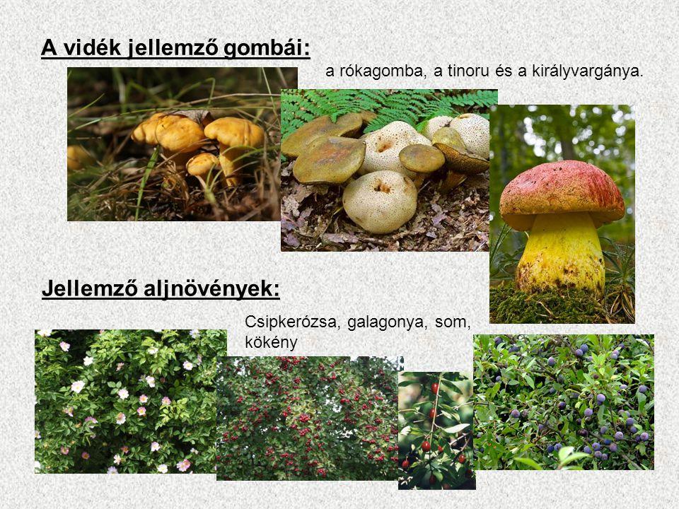 A vidék jellemző gombái: a rókagomba, a tinoru és a királyvargánya. Jellemző aljnövények: Csipkerózsa, galagonya, som, kökény