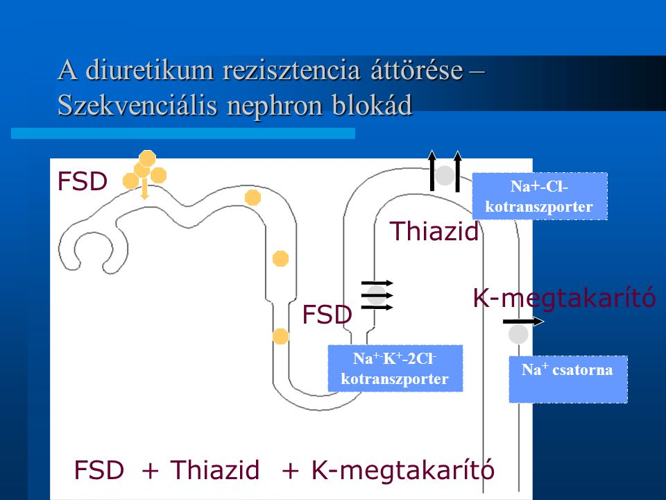 A diuretikum rezisztencia áttörése – Szekvenciális nephron blokád Na+-Cl- kotranszporter Na +- K + -2Cl - kotranszporter Na + csatorna FSD + Thiazid +