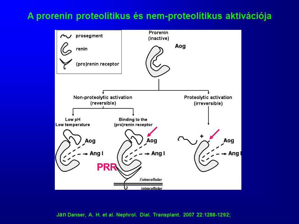 J an Danser, A. H. et al. Nephrol. Dial. Transplant. 2007 22:1288-1292; A prorenin proteolítikus és nem-proteolítikus aktivációja PRR