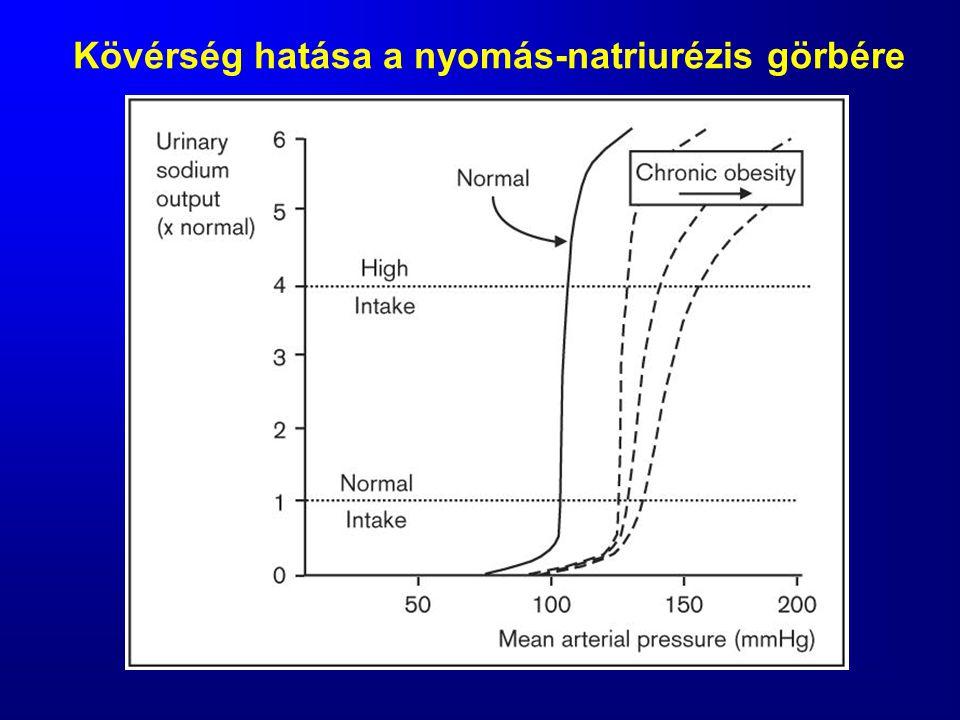 Kövérség hatása a nyomás-natriurézis görbére