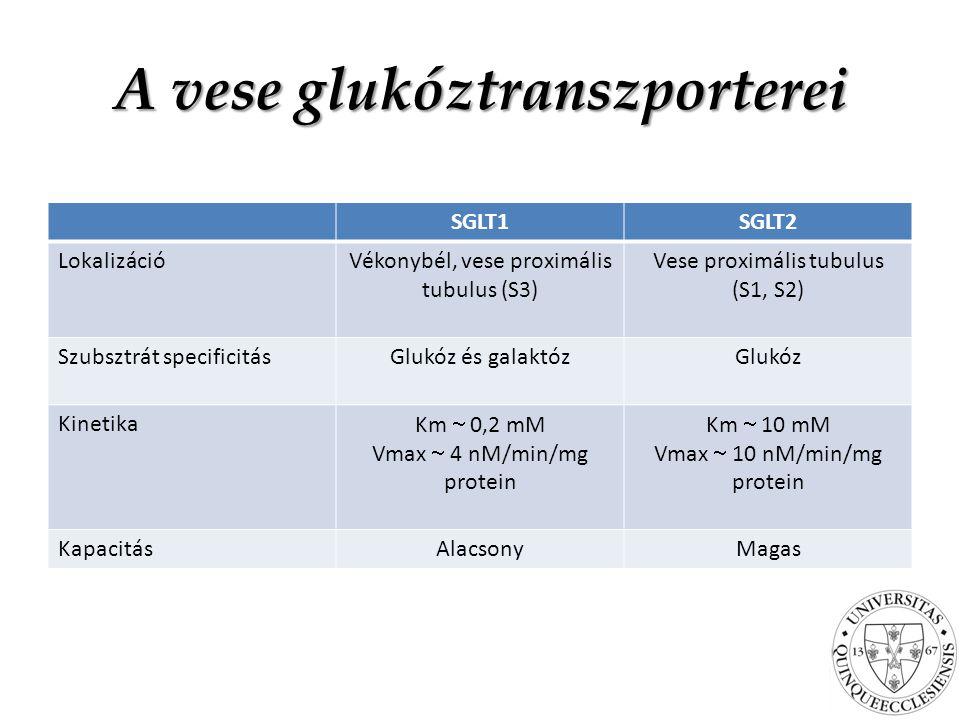 A vese glukóztranszporterei SGLT1SGLT2 LokalizációVékonybél, vese proximális tubulus (S3) Vese proximális tubulus (S1, S2) Szubsztrát specificitásGlukóz és galaktózGlukóz Kinetika Km  0,2 mM Vmax  4 nM/min/mg protein Km  10 mM Vmax  10 nM/min/mg protein KapacitásAlacsonyMagas