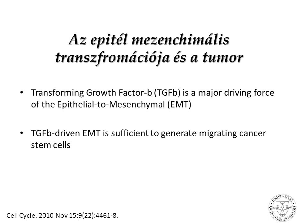Az epitél mezenchimális transzfromációja és a tumor Transforming Growth Factor-b (TGFb) is a major driving force of the Epithelial-to-Mesenchymal (EMT) TGFb-driven EMT is sufficient to generate migrating cancer stem cells Cell Cycle.