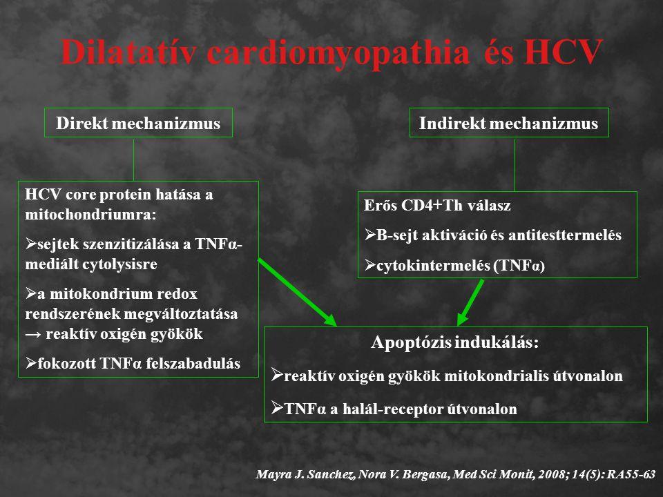 Dilatatív cardiomyopathia és HCV Mayra J. Sanchez, Nora V. Bergasa, Med Sci Monit, 2008; 14(5): RA55-63 Direkt mechanizmusIndirekt mechanizmus Apoptóz