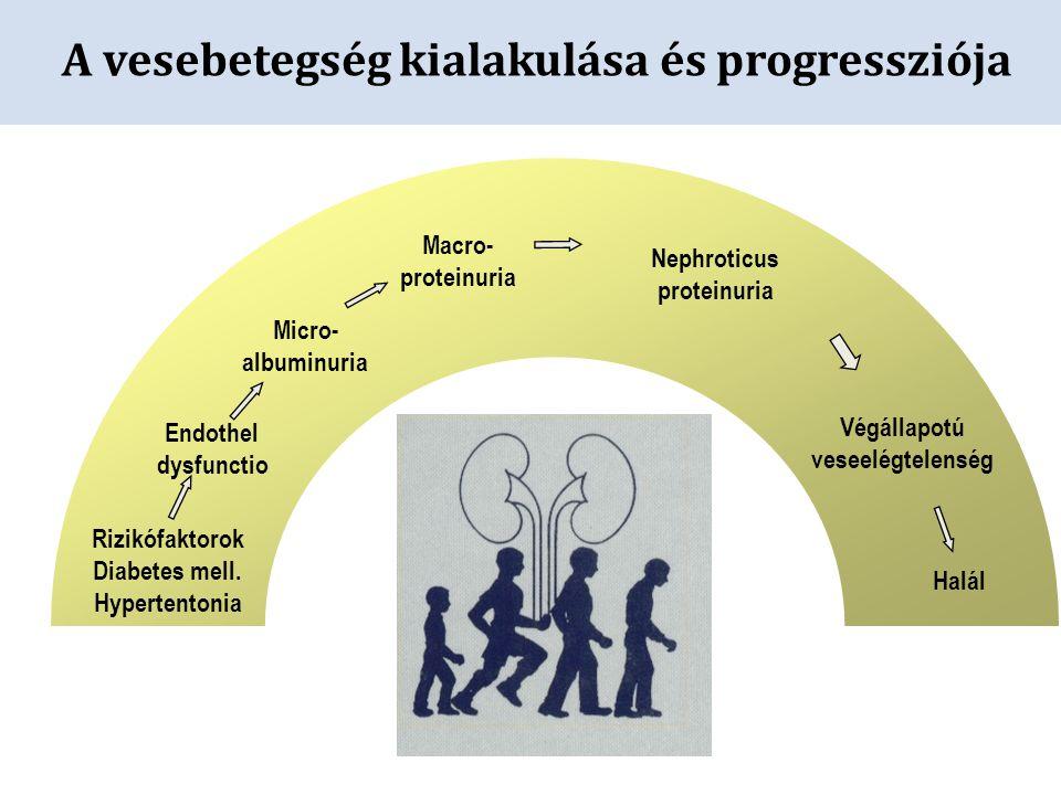 A vesebetegség kialakulása és progressziója Rizikófaktorok Diabetes mell. Hypertentonia Endothel dysfunctio Micro- albuminuria Macro- proteinuria Neph
