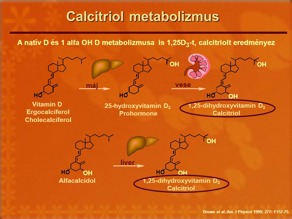 Calcitriol metabolizmus Brown et al. Am J Physiol 1999; 277: F157-75. Vitamin D Ergocalciferol Cholecalciferol 25-hydroxyvitamin D 3 Prohormone 1,25-d