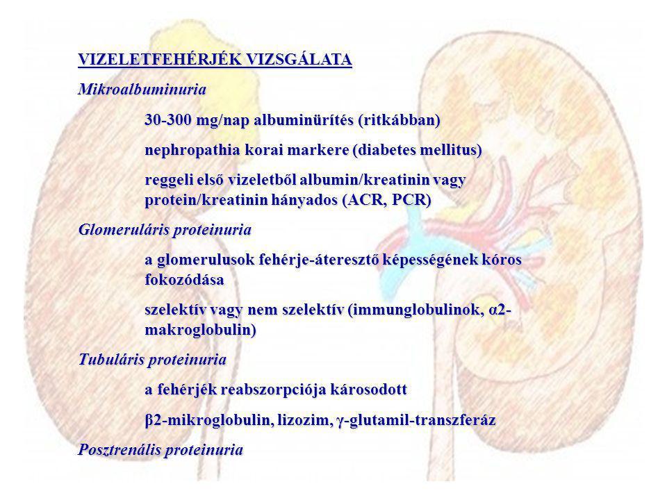 VIZELETFEHÉRJÉK VIZSGÁLATA Mikroalbuminuria 30-300 mg/nap albuminürítés (ritkábban) nephropathia korai markere (diabetes mellitus) reggeli első vizele