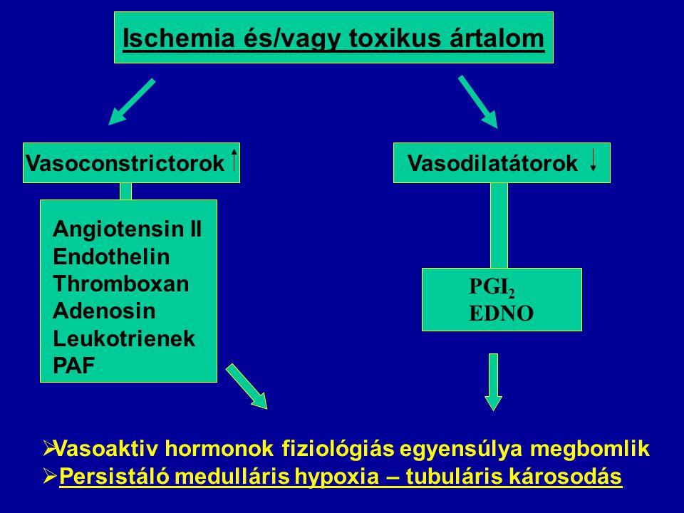 Ischemia és/vagy toxikus ártalom Vasoconstrictorok Angiotensin II Endothelin Thromboxan Adenosin Leukotrienek PAF Vasodilatátorok PGI 2 EDNO  Vasoaktiv hormonok fiziológiás egyensúlya megbomlik  Persistáló medulláris hypoxia – tubuláris károsodás