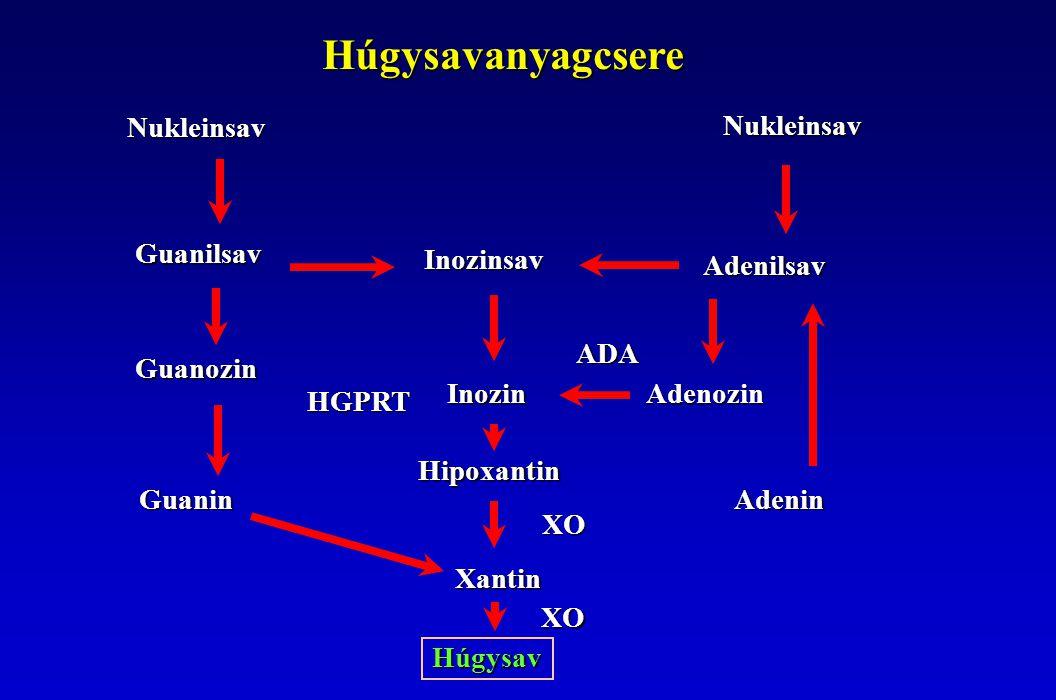 Hiperurikemia Szérum húgysav > 417 mikromol/l ffi: 420 nő: 360 1.Primer hiperurikemia Genetikai eltérések (fokozott termelés, csökkent kiválasztás, monogén - polygén)
