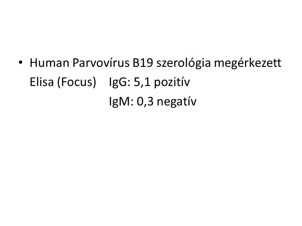 Human Parvovírus B19 szerológia megérkezett Elisa (Focus) IgG: 5,1 pozitív IgM: 0,3 negatív