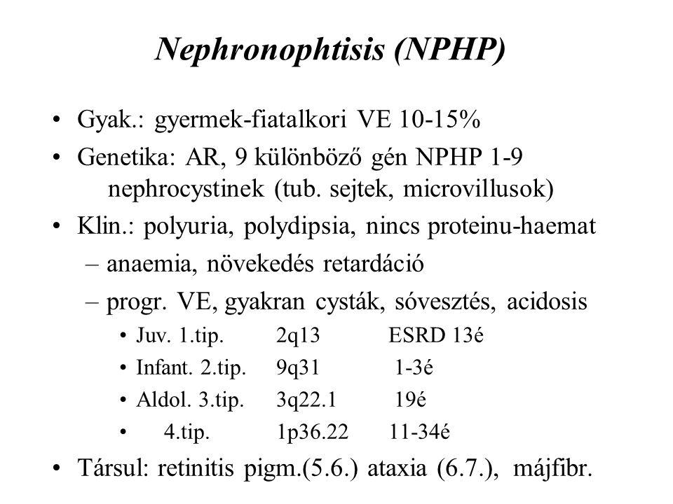 Nephronophtisis (NPHP) Gyak.: gyermek-fiatalkori VE 10-15% Genetika: AR, 9 különböző gén NPHP 1-9 nephrocystinek (tub. sejtek, microvillusok) Klin.: p