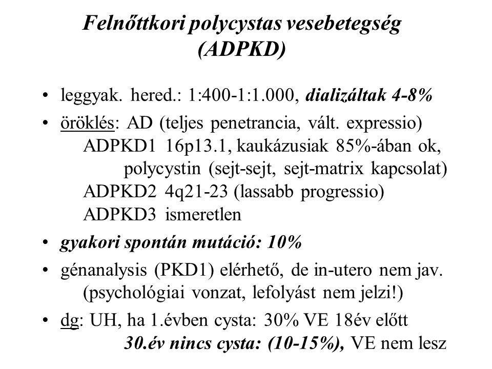 Felnőttkori polycystas vesebetegség (ADPKD) leggyak. hered.: 1:400-1:1.000, dializáltak 4-8% öröklés: AD (teljes penetrancia, vált. expressio) ADPKD1