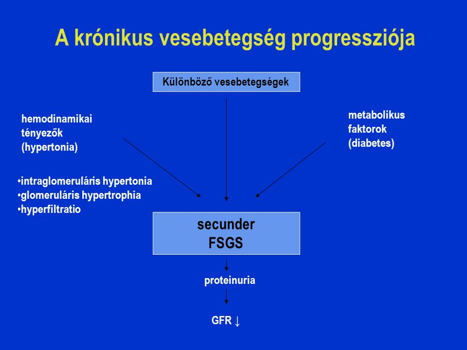 A krónikus vesebetegség progressziója Különböző vesebetegségek hemodinamikai tényezők (hypertonia) intraglomeruláris hypertonia glomeruláris hypertrophia hyperfiltratio metabolikus faktorok (diabetes) secunder FSGS proteinuria GFR ↓