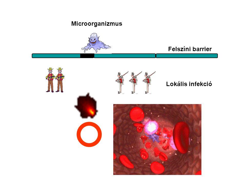 Felszíni barrier Lokális infekció Microorganizmus Bejutás az érpályába