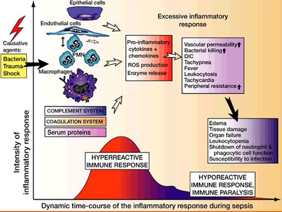 Súlyos sepsis Szepszis + szervdiszfunkció, hipoperfúzió, gyulladás indukálta hipotenzió