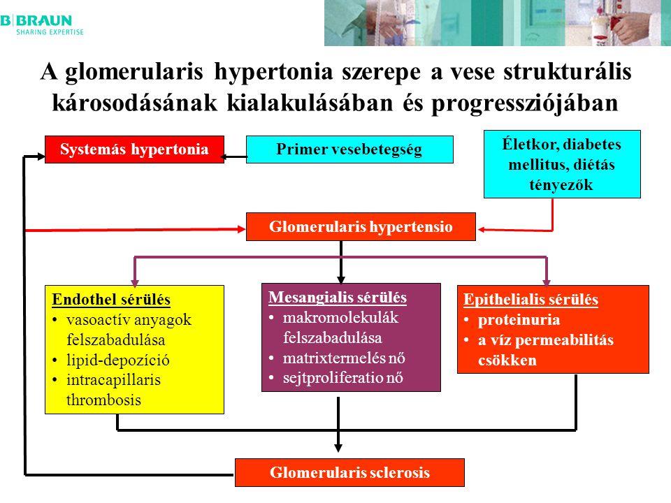 A glomerularis hypertonia szerepe a vese strukturális károsodásának kialakulásában és progressziójában Systemás hypertoniaPrimer vesebetegség Életkor, diabetes mellitus, diétás tényezők Glomerularis hypertensio Glomerularis sclerosis Endothel sérülés vasoactív anyagok felszabadulása lipid-depozíció intracapillaris thrombosis Mesangialis sérülés makromolekulák felszabadulása matrixtermelés nő sejtproliferatio nő Epithelialis sérülés proteinuria a víz permeabilitás csökken
