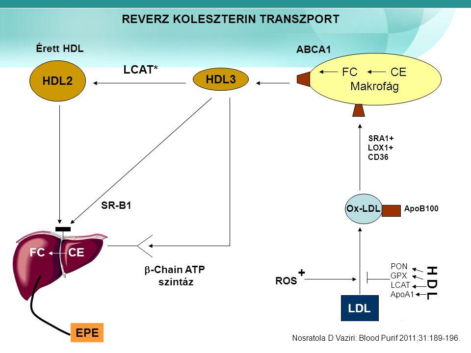 HDL2 Érett HDL LCAT* HDL3 FC CE Makrofág ABCA1 Ox-LDL ApoB100 SRA1+ LOX1+ CD36 LDL ROS H D L PON GPX LCAT ApoA1 + FC CE SR-B1  -Chain ATP szintáz EPE Nosratola D Vaziri: Blood Purif 2011;31:189-196.