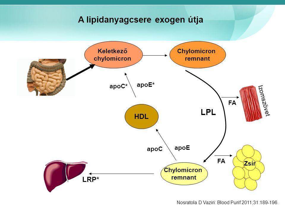 Keletkező chylomicron Chylomicron remnant Chylomicron remnant HDL FA LPL apoC apoE apoC* apoE* LRP* Izomszövet Zsír A lipidanyagcsere exogen útja Nosratola D Vaziri: Blood Purif 2011;31:189-196.