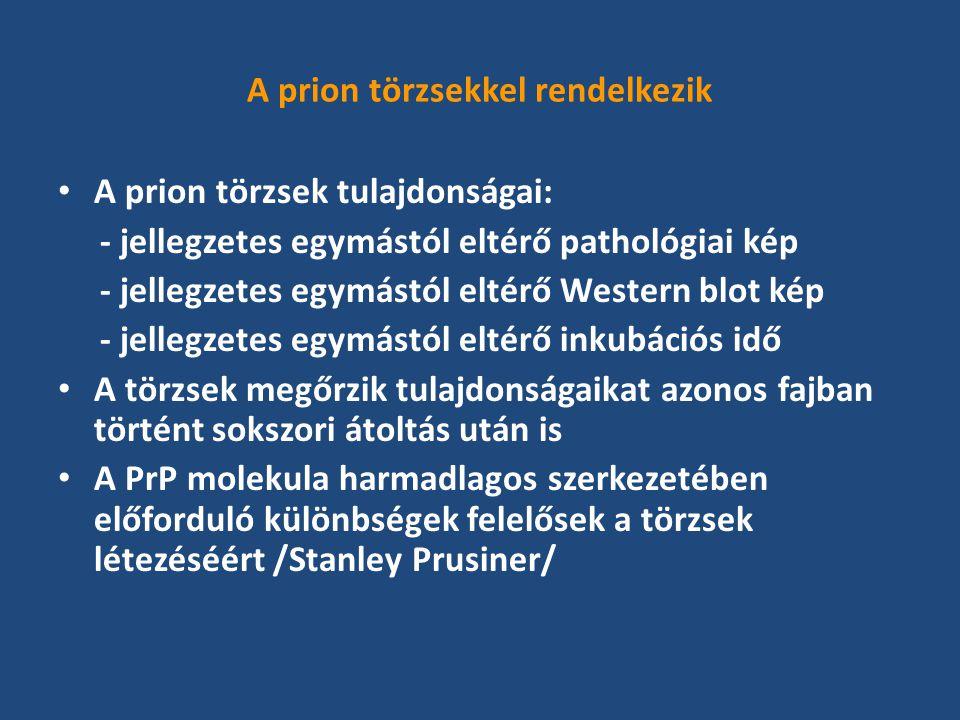 A prion törzsekkel rendelkezik A prion törzsek tulajdonságai: - jellegzetes egymástól eltérő pathológiai kép - jellegzetes egymástól eltérő Western blot kép - jellegzetes egymástól eltérő inkubációs idő A törzsek megőrzik tulajdonságaikat azonos fajban történt sokszori átoltás után is A PrP molekula harmadlagos szerkezetében előforduló különbségek felelősek a törzsek létezéséért /Stanley Prusiner/