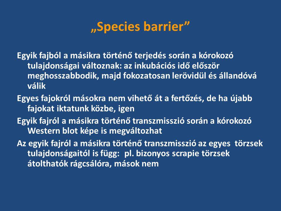 """""""Species barrier Egyik fajból a másikra történő terjedés során a kórokozó tulajdonságai változnak: az inkubációs idő először meghosszabbodik, majd fokozatosan lerövidül és állandóvá válik Egyes fajokról másokra nem vihető át a fertőzés, de ha újabb fajokat iktatunk közbe, igen Egyik fajról a másikra történő transzmisszió során a kórokozó Western blot képe is megváltozhat Az egyik fajról a másikra történő transzmisszió az egyes törzsek tulajdonságaitól is függ: pl."""