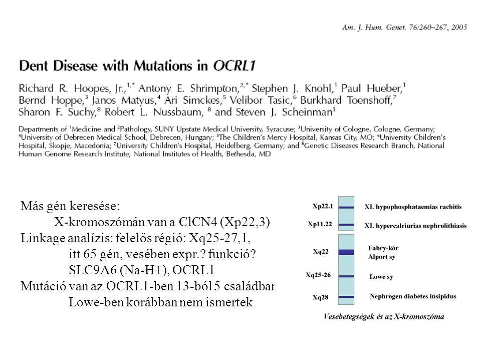 Más gén keresése: X-kromoszómán van a ClCN4 (Xp22,3) Linkage analízis: felelős régió: Xq25-27,1, itt 65 gén, vesében expr.? funkció? SLC9A6 (Na-H+), O