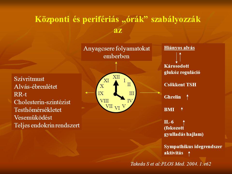 """XII I II III IV VI V IX X Központi és perifériás """"órák"""" szabályozzák az. XI Anyagcsere folyamatokat emberben Szívritmust Alvás-ébrenlétet RR-t Cholest"""
