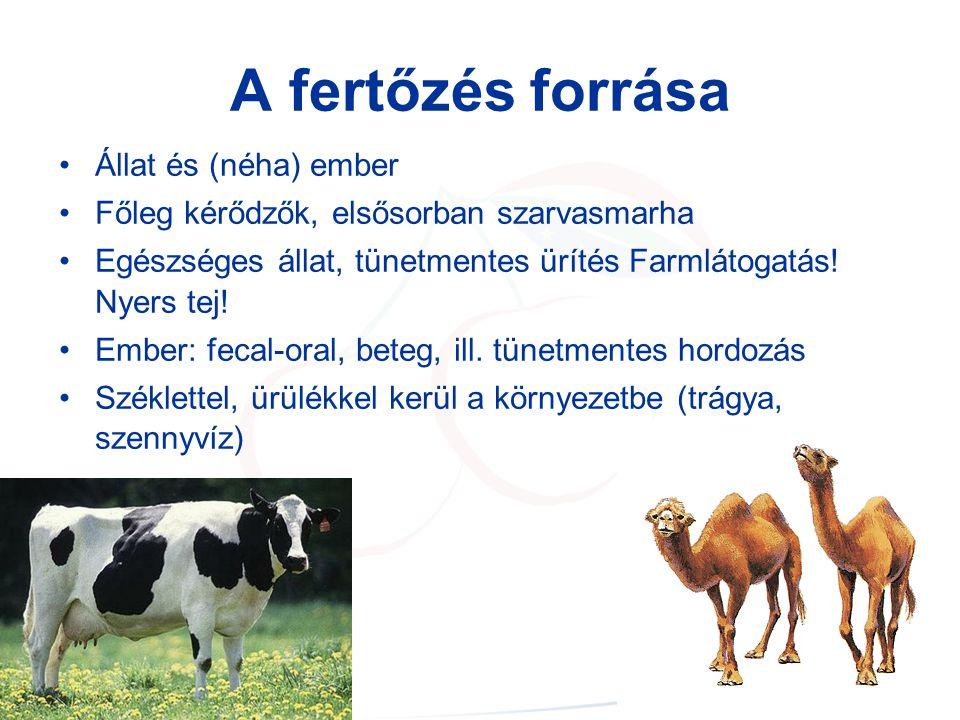 A fertőzés forrása Állat és (néha) ember Főleg kérődzők, elsősorban szarvasmarha Egészséges állat, tünetmentes ürítés Farmlátogatás.