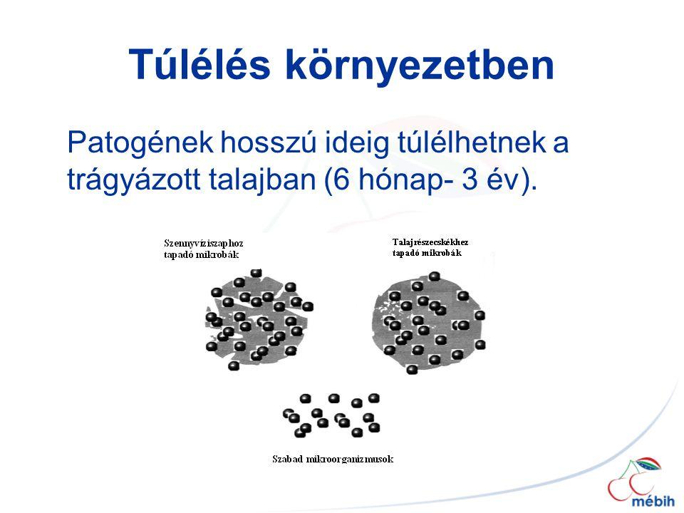 Túlélés környezetben Patogének hosszú ideig túlélhetnek a trágyázott talajban (6 hónap- 3 év).