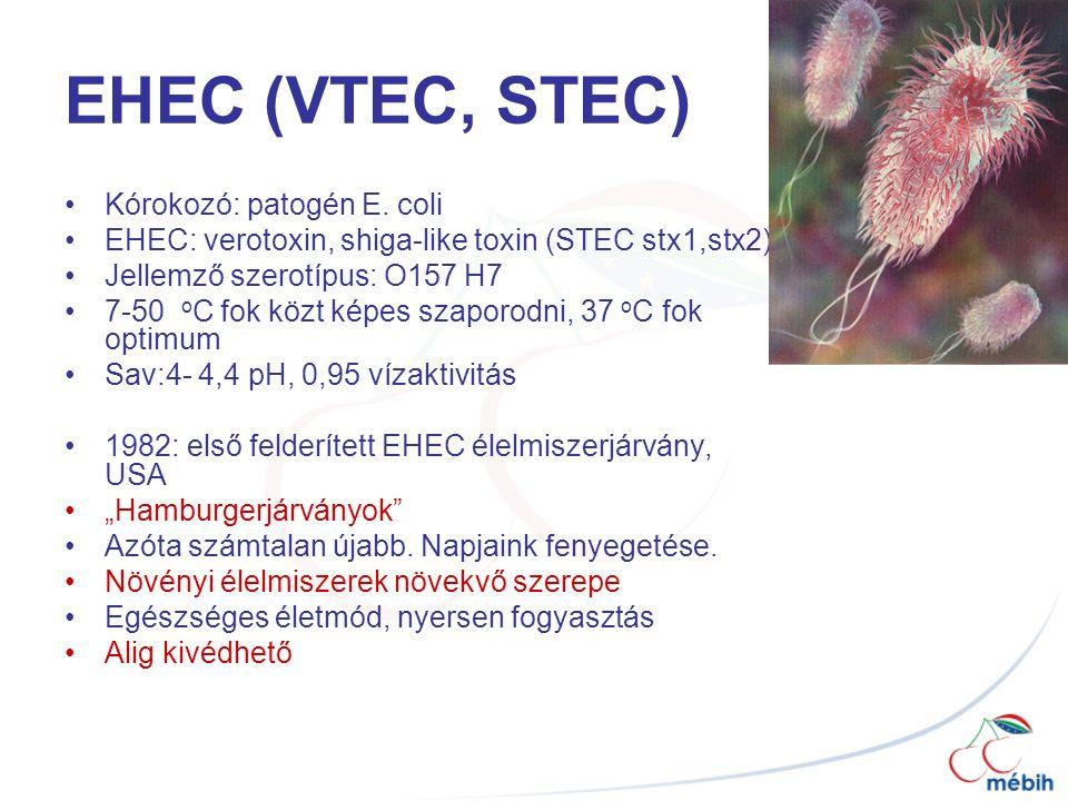 EHEC (VTEC, STEC) Kórokozó: patogén E. coli EHEC: verotoxin, shiga-like toxin (STEC stx1,stx2) Jellemző szerotípus: O157 H7 7-50 o C fok közt képes sz