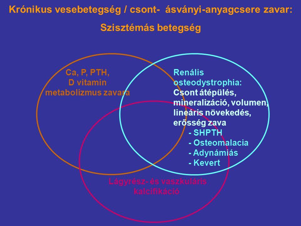 Osteocyta, osteoblast Foszfát ürítés Kalcitriol szint NaPi-2a NaPi-2c 24-hidroxiláz 1α-hidroxiláz CaSR VDR PTH Hyperplasia A fibroblaszt növekedési faktor (FGF-23) hatásai Foszfát retenció FGF-23 Klotho-FGFR