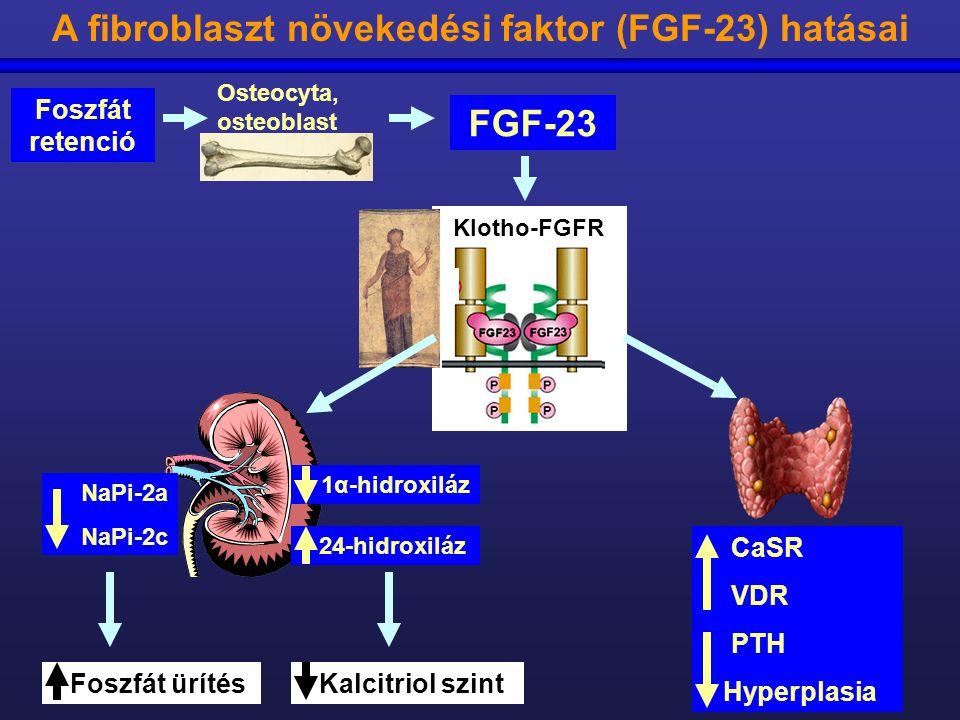 Osteocyta, osteoblast Foszfát ürítés Kalcitriol szint NaPi-2a NaPi-2c 24-hidroxiláz 1α-hidroxiláz CaSR VDR PTH Hyperplasia A fibroblaszt növekedési fa