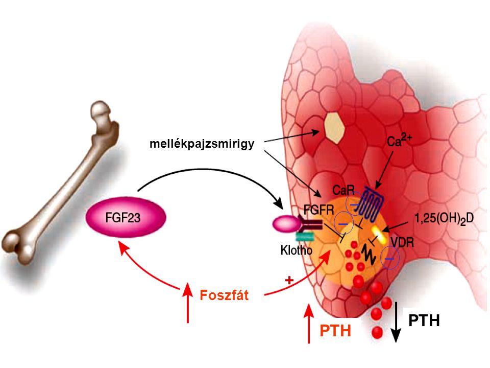D vitamin receptor expresszió szekunder hyperparathyreosisban kontroll Kidney Int.