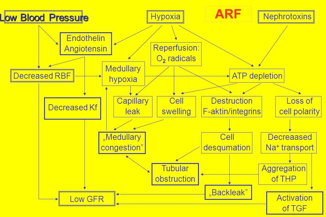 Low Blood Pressure HypoxiaNephrotoxins Endothelin Angiotensin Reperfusion: O 2 radicals Decreased RBF Medullary hypoxia ATP depletion Decreased Kf Cap