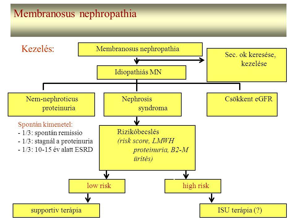 Membranosus nephropathia Kezelés: Membranosus nephropathia Idiopathiás MN Nephrosis syndroma Csökkent eGFRNem-nephroticus proteinuria Rizikóbecslés (r