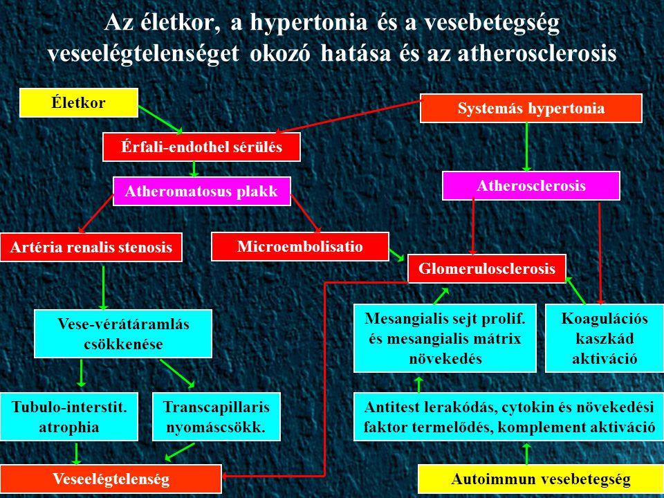 Az életkor, a hypertonia és a vesebetegség veseelégtelenséget okozó hatása és az atherosclerosis Életkor Systemás hypertonia VeseelégtelenségAutoimmun vesebetegség Érfali-endothel sérülés Atheromatosus plakk Artéria renalis stenosis Microembolisatio Vese-vérátáramlás csökkenése Tubulo-interstit.