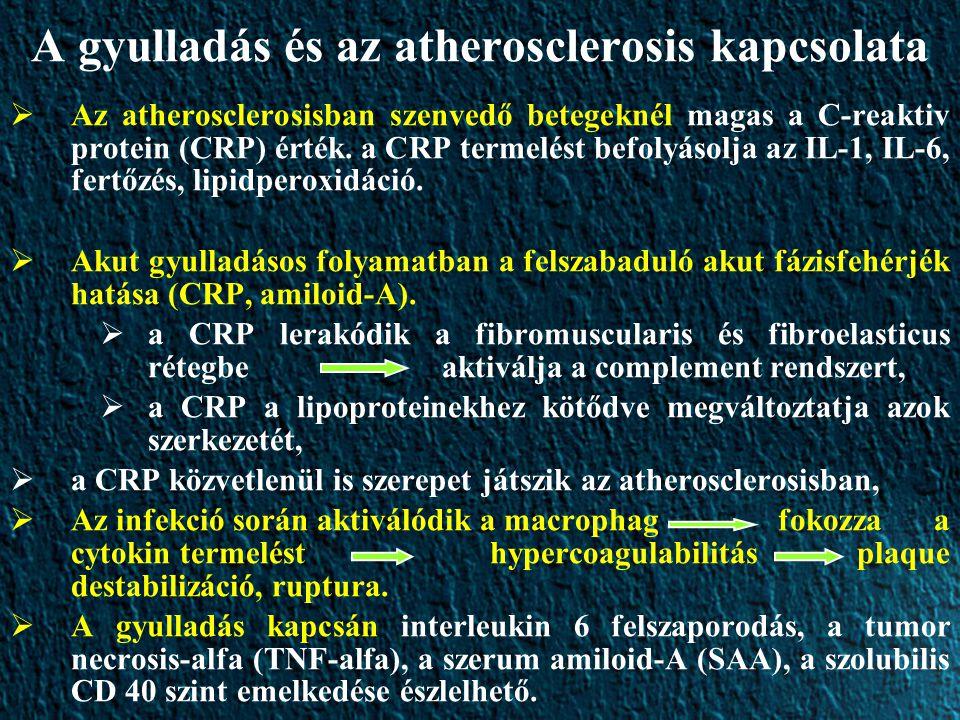 A gyulladás és az atherosclerosis kapcsolata  Az atherosclerosisban szenvedő betegeknél magas a C-reaktiv protein (CRP) érték.