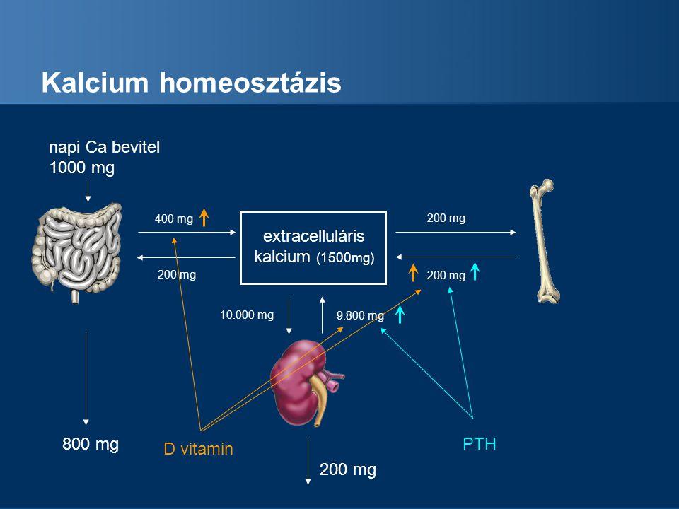 A test foszfor tartalmának megoszlása Intracellularis P 13% Extracelluláris P 0.5% Teljes test foszfor = 700 g Csont 86%